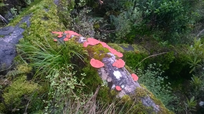 Fungi reclaiming nutrients from a fallen forest giant...
