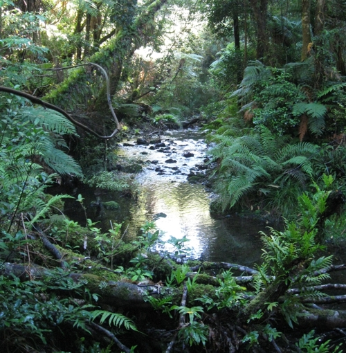Freshwater stream set in beautiful native forest