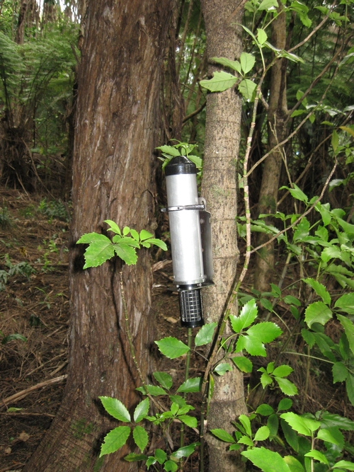 Acoustic recorder on a tree set to record bird song